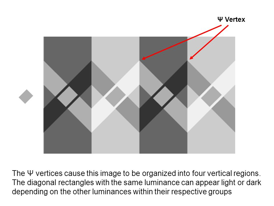 Ψ Vertex The Ψ vertices cause this image to be organized into four vertical regions. The diagonal rectangles with the same luminance can appear light