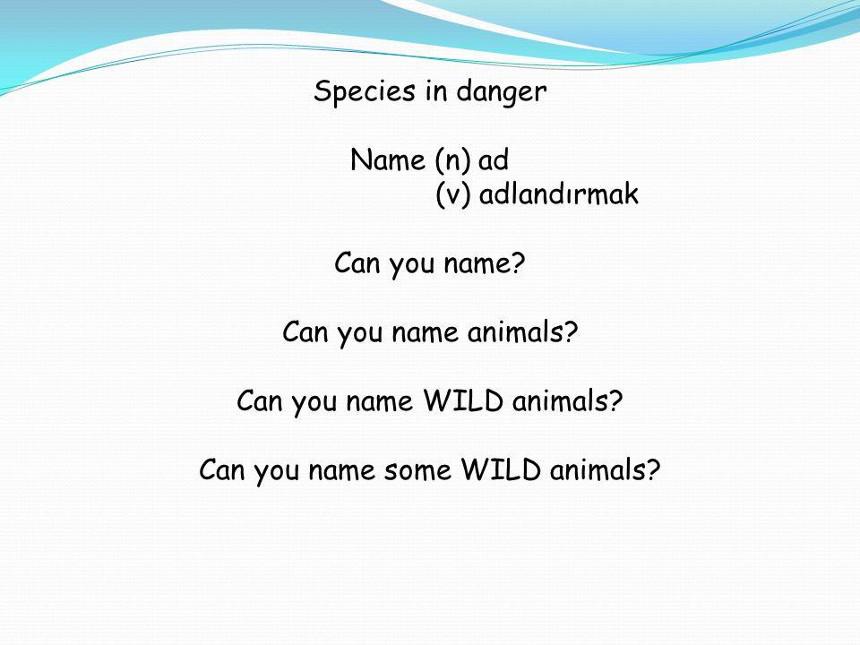 Species in danger Name (n) ad (v) adlandırmak Can you name? Can you name animals? Can you name WILD animals? Can you name some WILD animals?