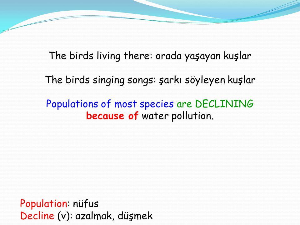 The birds living there: orada yaşayan kuşlar The birds singing songs: şarkı söyleyen kuşlar Populations of most species are DECLINING because of water