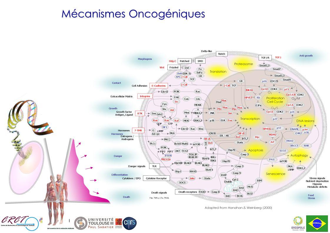 Mécanismes Oncogéniques