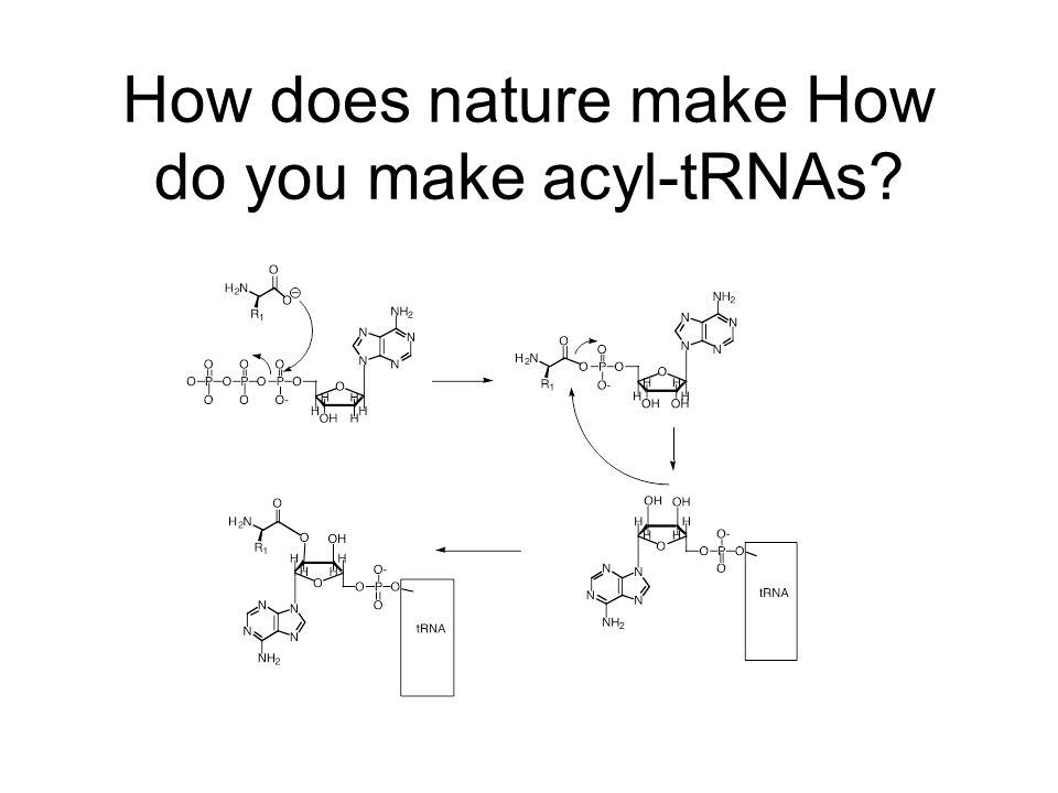 How does nature make How do you make acyl-tRNAs