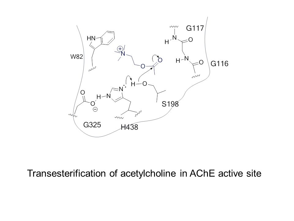 Transesterification of acetylcholine in AChE active site