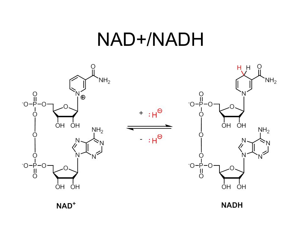 NAD+/NADH