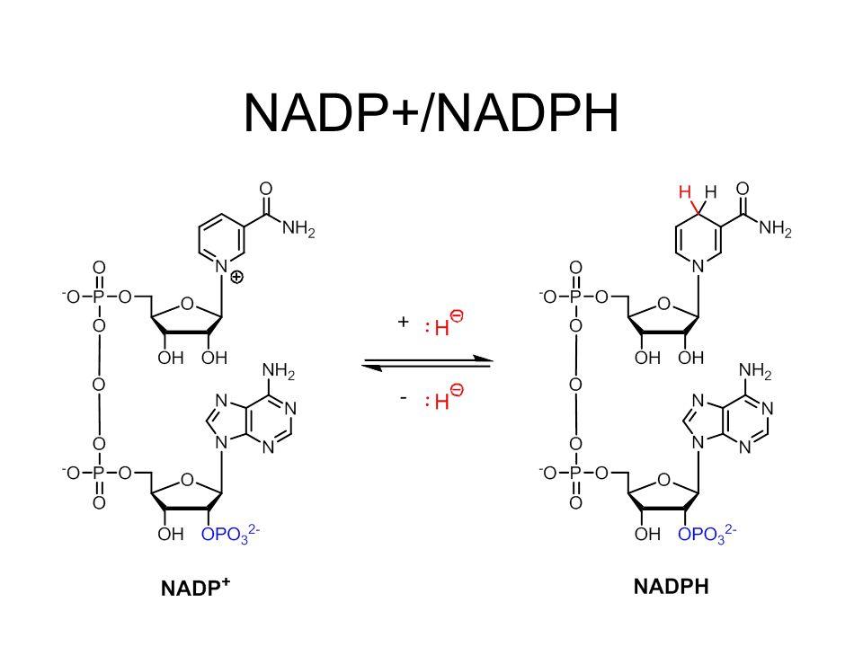 NADP+/NADPH