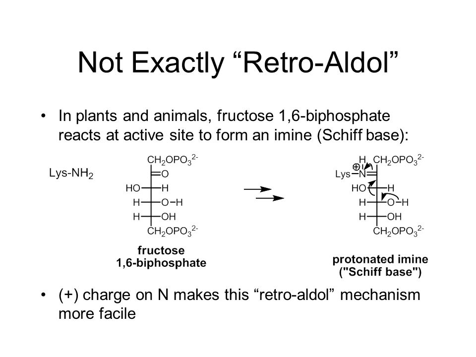 Not Exactly Retro-Aldol In plants and animals, fructose 1,6-biphosphate reacts at active site to form an imine (Schiff base): (+) charge on N makes this retro-aldol mechanism more facile
