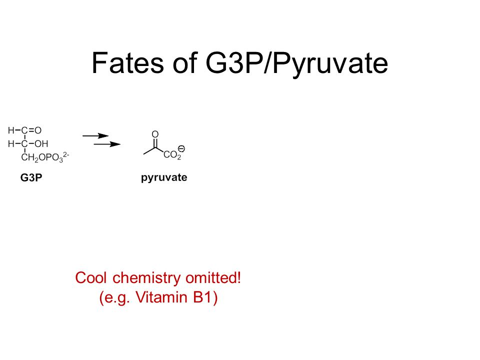 Fates of G3P/Pyruvate Cool chemistry omitted! (e.g. Vitamin B1)
