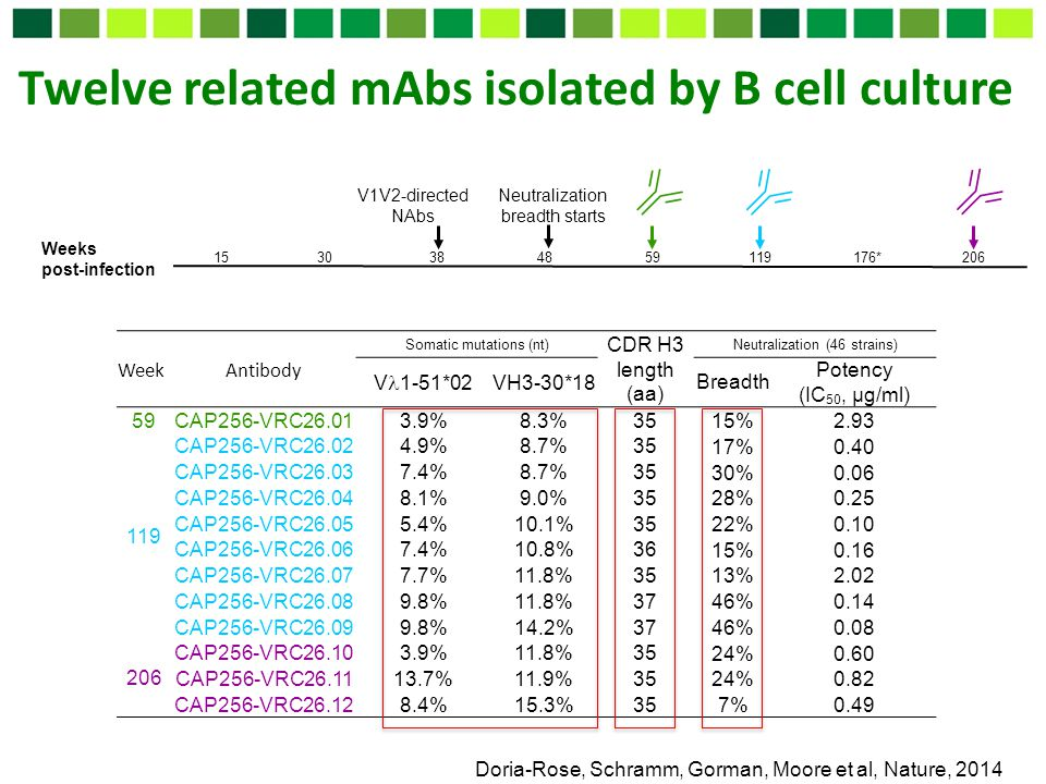 Twelve related mAbs isolated by B cell culture Doria-Rose, Schramm, Gorman, Moore et al, Nature, 2014 Weeks post-infection V1V2-directed NAbs 15 30 38