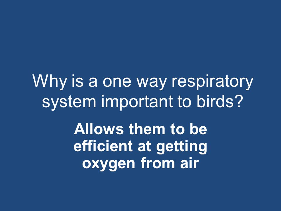 Why is a one way respiratory system important to birds? Allows them to be efficient at getting oxygen from air