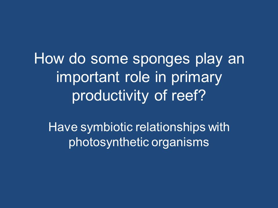 How do some sponges play an important role in primary productivity of reef? Have symbiotic relationships with photosynthetic organisms