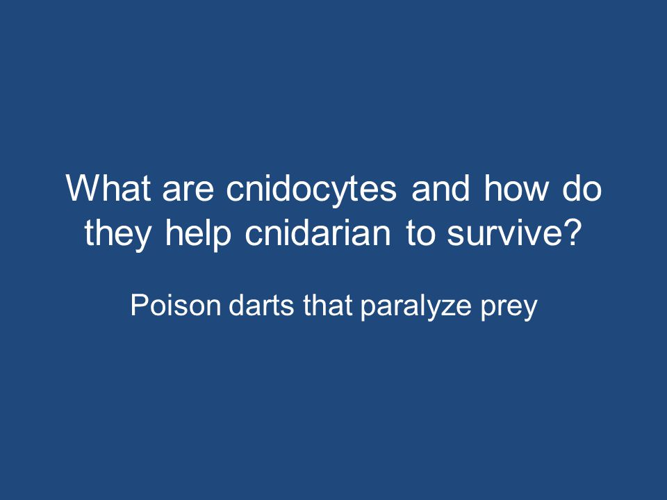 What are cnidocytes and how do they help cnidarian to survive? Poison darts that paralyze prey