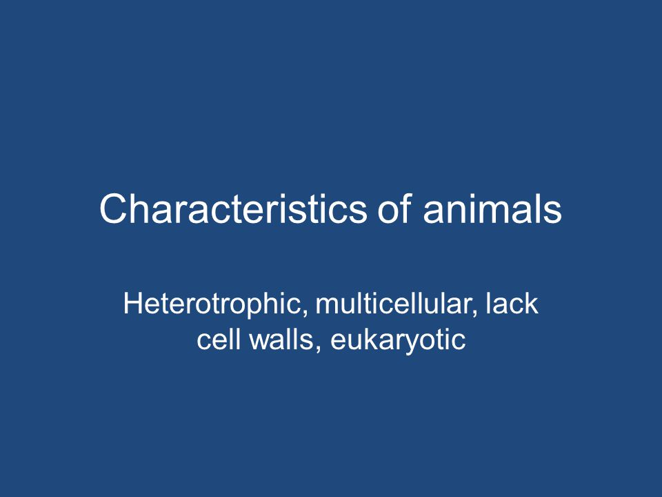Which group of mammals lays eggs? monotremes