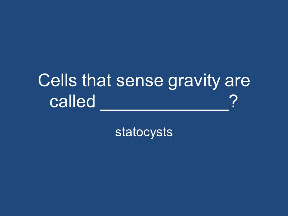 Cells that sense gravity are called _____________? statocysts