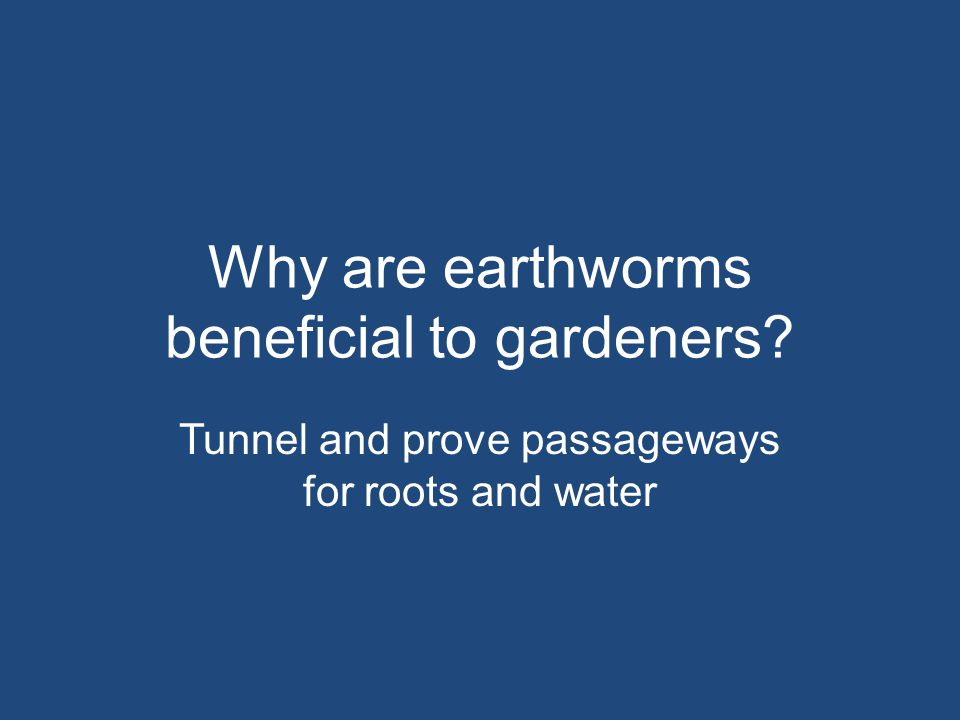 Why are earthworms beneficial to gardeners? Tunnel and prove passageways for roots and water