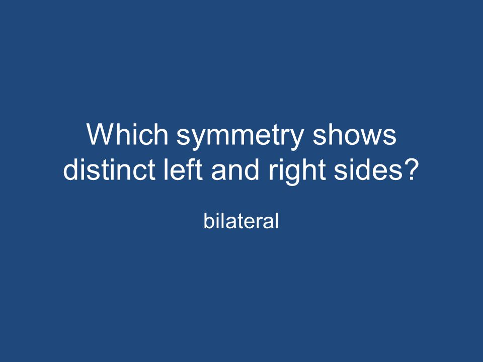 Which symmetry shows distinct left and right sides? bilateral
