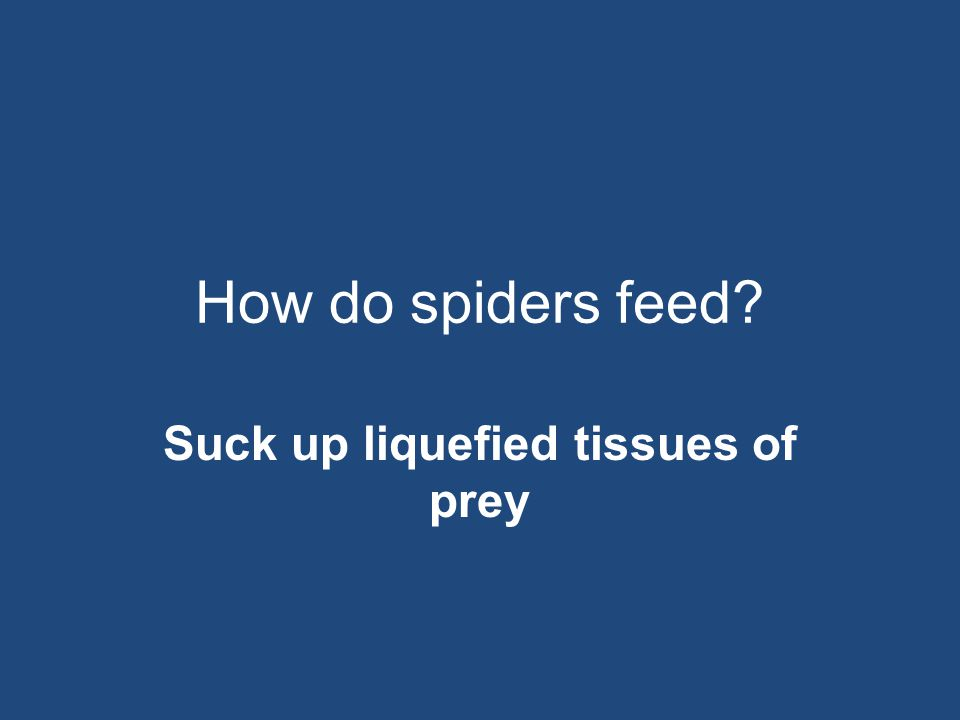 How do spiders feed? Suck up liquefied tissues of prey