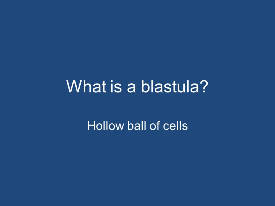 What is a blastula? Hollow ball of cells