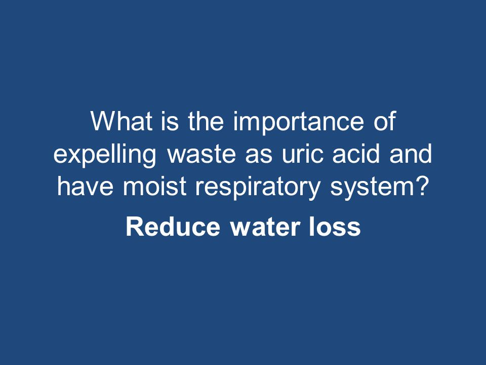 What is the importance of expelling waste as uric acid and have moist respiratory system? Reduce water loss