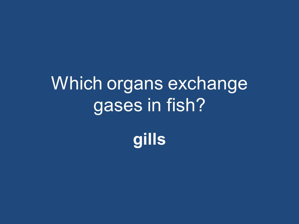 Which organs exchange gases in fish? gills