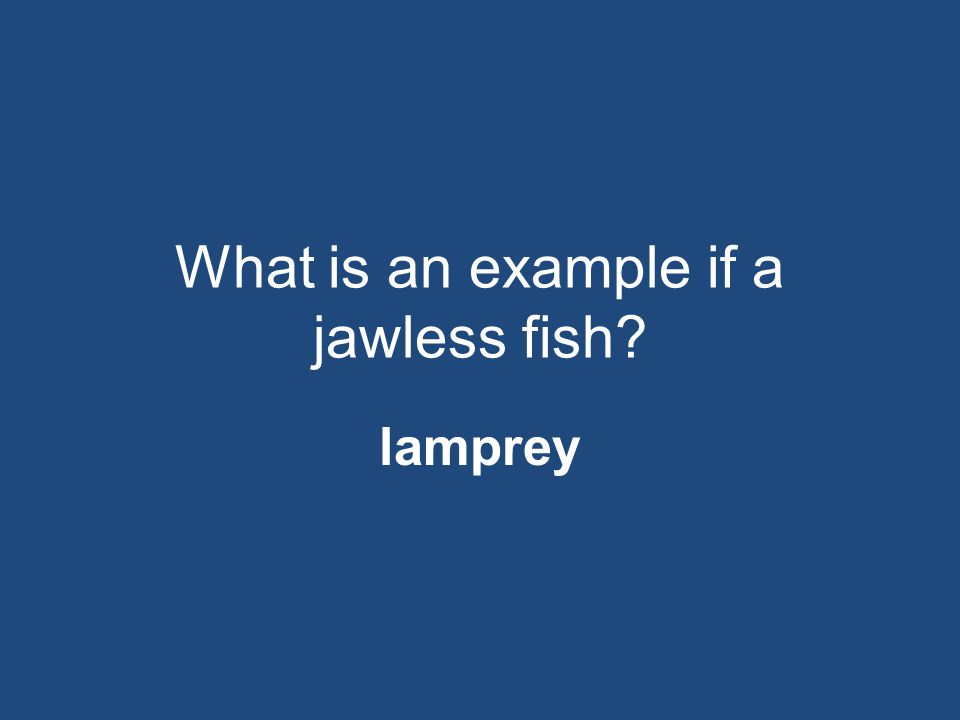 What is an example if a jawless fish? lamprey