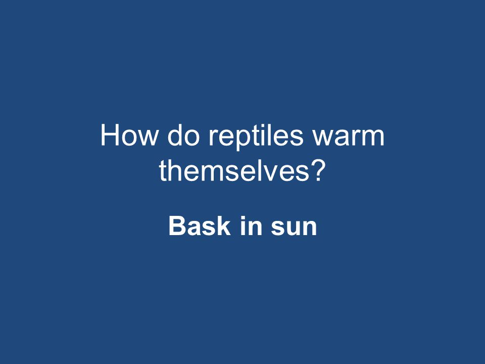 How do reptiles warm themselves? Bask in sun