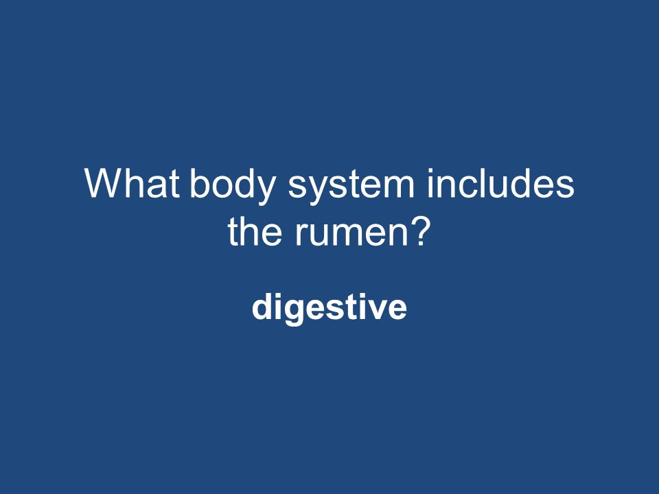 What body system includes the rumen? digestive
