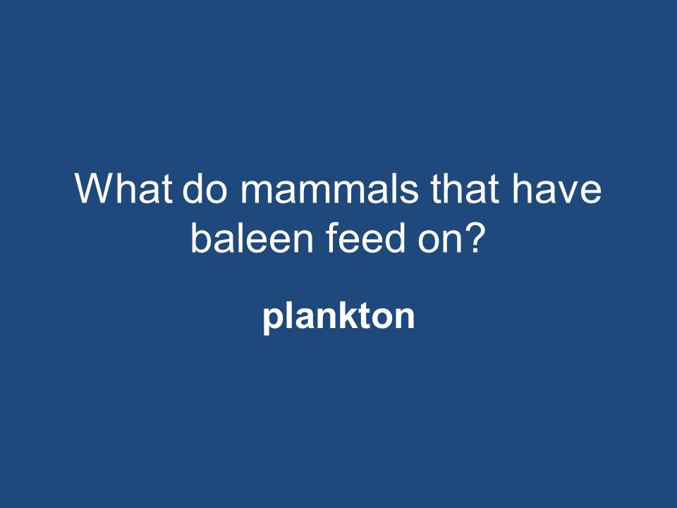 What do mammals that have baleen feed on? plankton