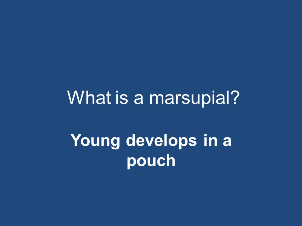 What is a marsupial? Young develops in a pouch