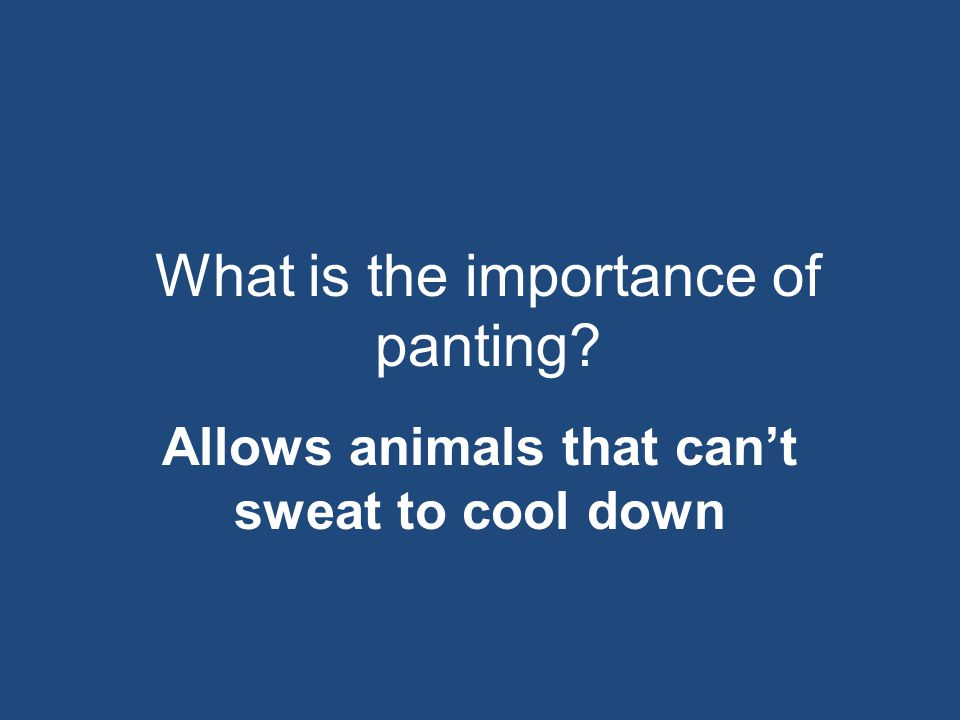 What is the importance of panting? Allows animals that can't sweat to cool down