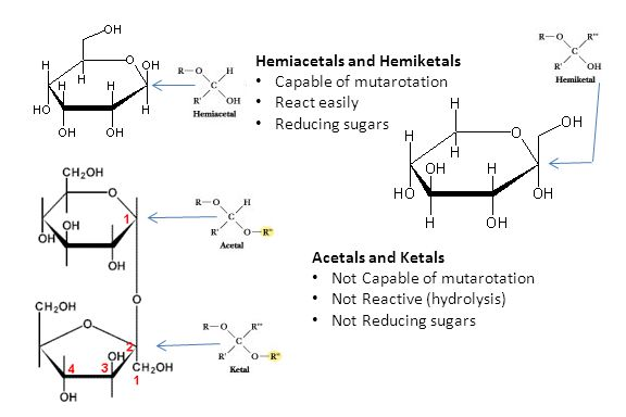 Hemiacetals and Hemiketals Capable of mutarotation React easily Reducing sugars Acetals and Ketals Not Capable of mutarotation Not Reactive (hydrolysi