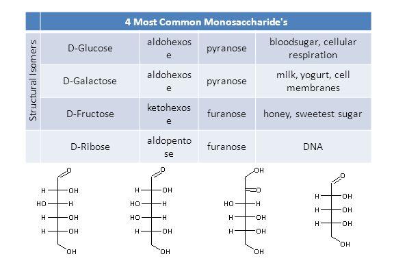 4 Most Common Monosaccharide's Structural Isomers D-Glucose aldohexos e pyranose bloodsugar, cellular respiration D-Galactose aldohexos e pyranose mil