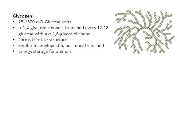 Glycogen: 25-1300 α-D-Glucose units α-1,4-glycosidic bonds, branched every 12-18 glucose with a α-1,6-glycosidic bond Forms tree like structure Simila