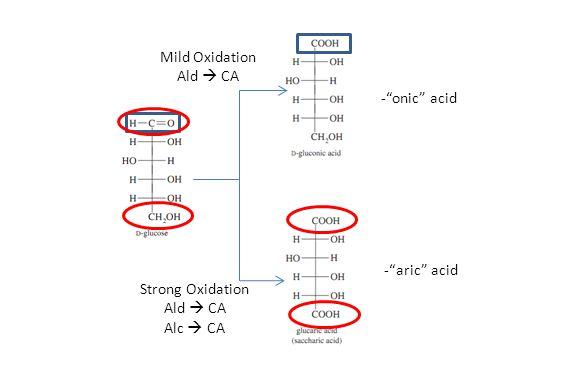 "Mild Oxidation Ald  CA Strong Oxidation Ald  CA Alc  CA -""onic"" acid -""aric"" acid"