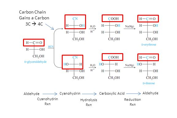 Cyanohydrin Rxn Aldehyde Cyanohydrin Reduction Rxn Carboxylic Acid Aldehyde Hydrolysis Rxn Carbon Chain Gains a Carbon 3C  4C