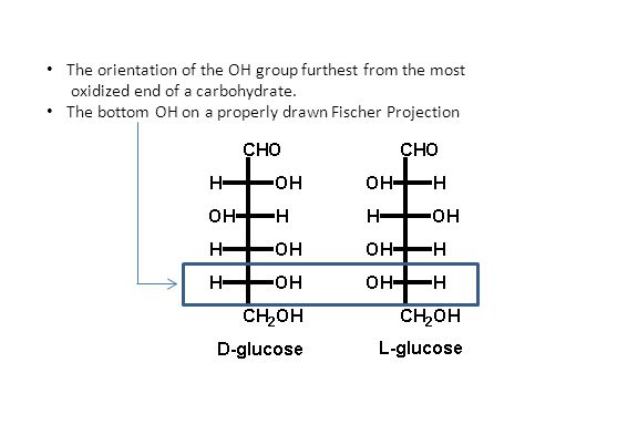 The orientation of the OH group furthest from the most oxidized end of a carbohydrate. The bottom OH on a properly drawn Fischer Projection