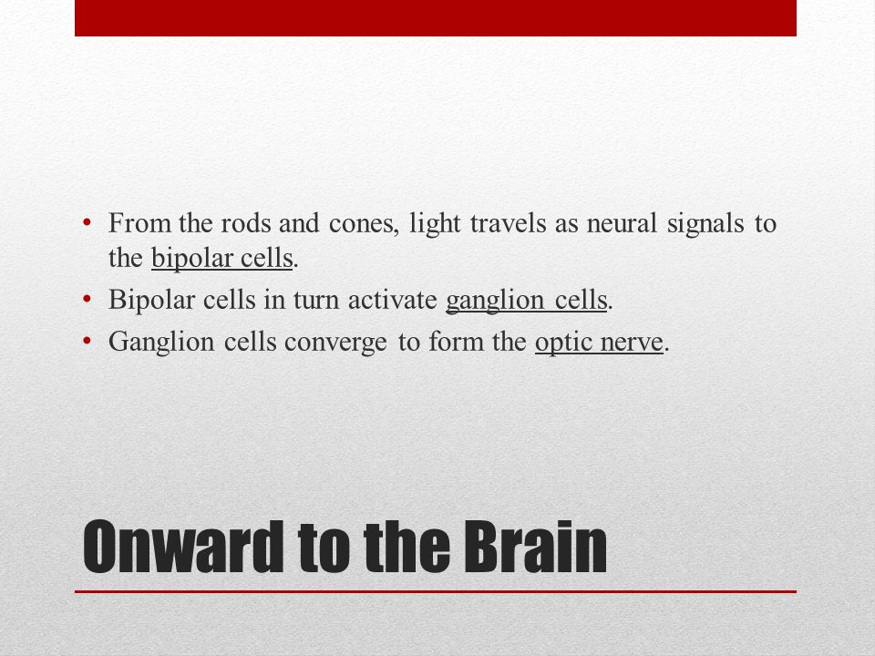 Onward to the Brain From the rods and cones, light travels as neural signals to the bipolar cells. Bipolar cells in turn activate ganglion cells. Gang
