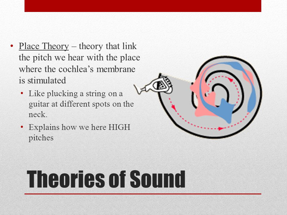 Theories of Sound Place Theory – theory that link the pitch we hear with the place where the cochlea's membrane is stimulated Like plucking a string on a guitar at different spots on the neck.