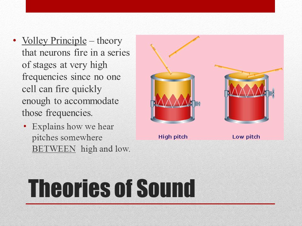 Theories of Sound Volley Principle – theory that neurons fire in a series of stages at very high frequencies since no one cell can fire quickly enough to accommodate those frequencies.