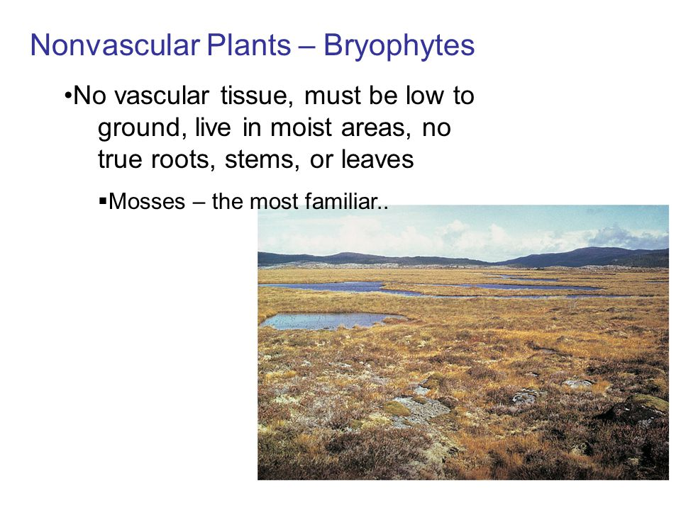 Plants, including mosses, have two distinct versions of the plant –The gametophyte, which produces gametes –The sporophyte, which produces spores (phyte = plant)..