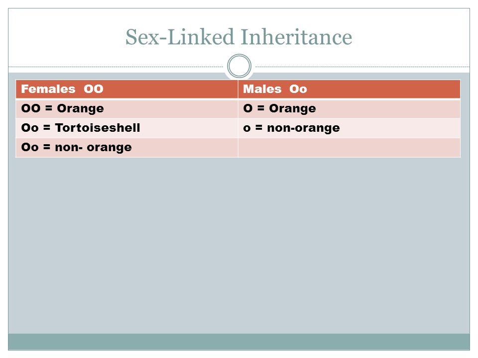Sex-Linked Inheritance Females OOMales Oo OO = OrangeO = Orange Oo = Tortoiseshello = non-orange Oo = non- orange