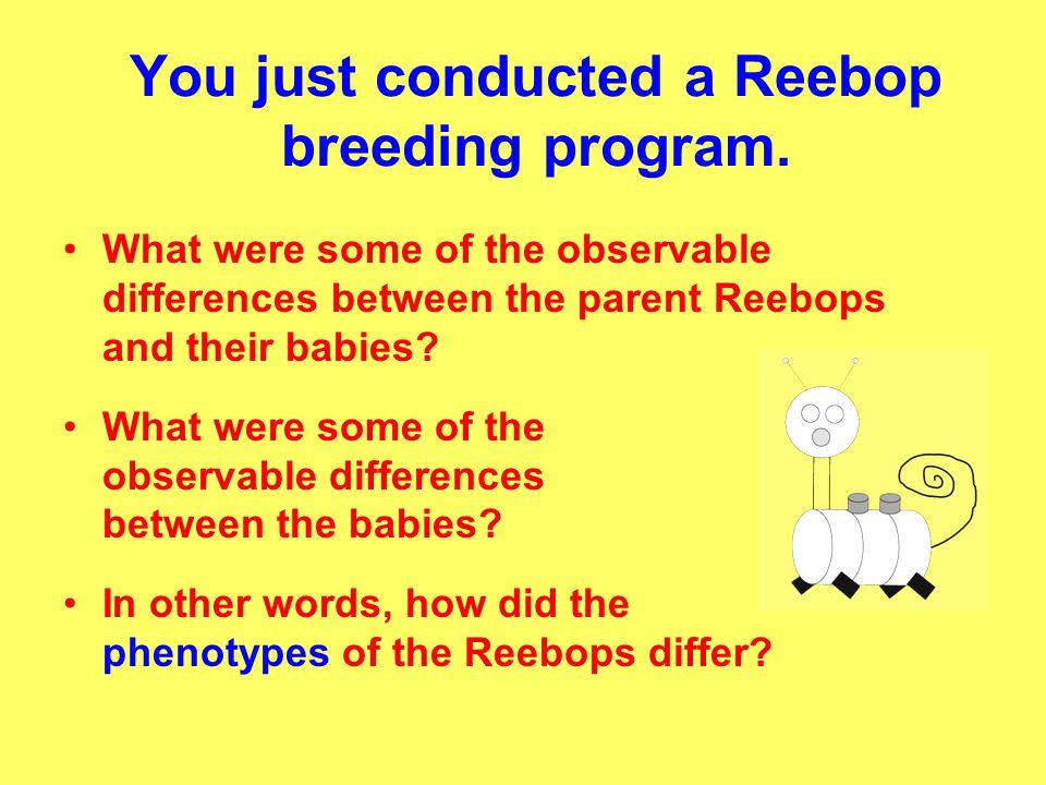 Reebop Reproduction