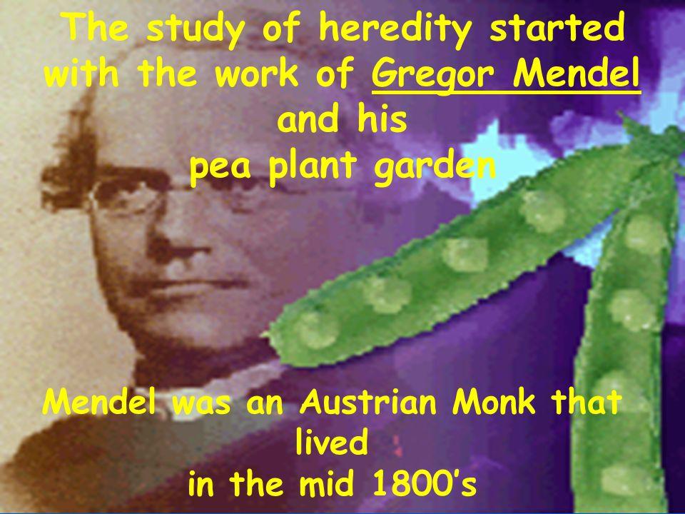Mendel's Laws of Heredity Why we look the way we look...