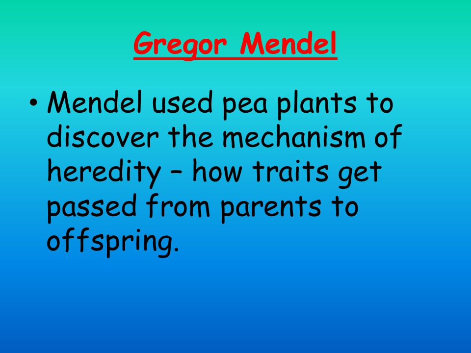 Mendels' cross between tall pea plants and small pea plants yielded all tall pea plants. x =