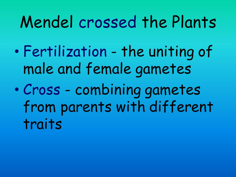 Questions What did Mendel cross.What are traits. What are gametes.