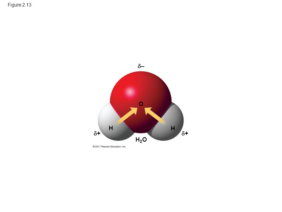 Figure 2.13 H H H2OH2O ++ ++ –– O