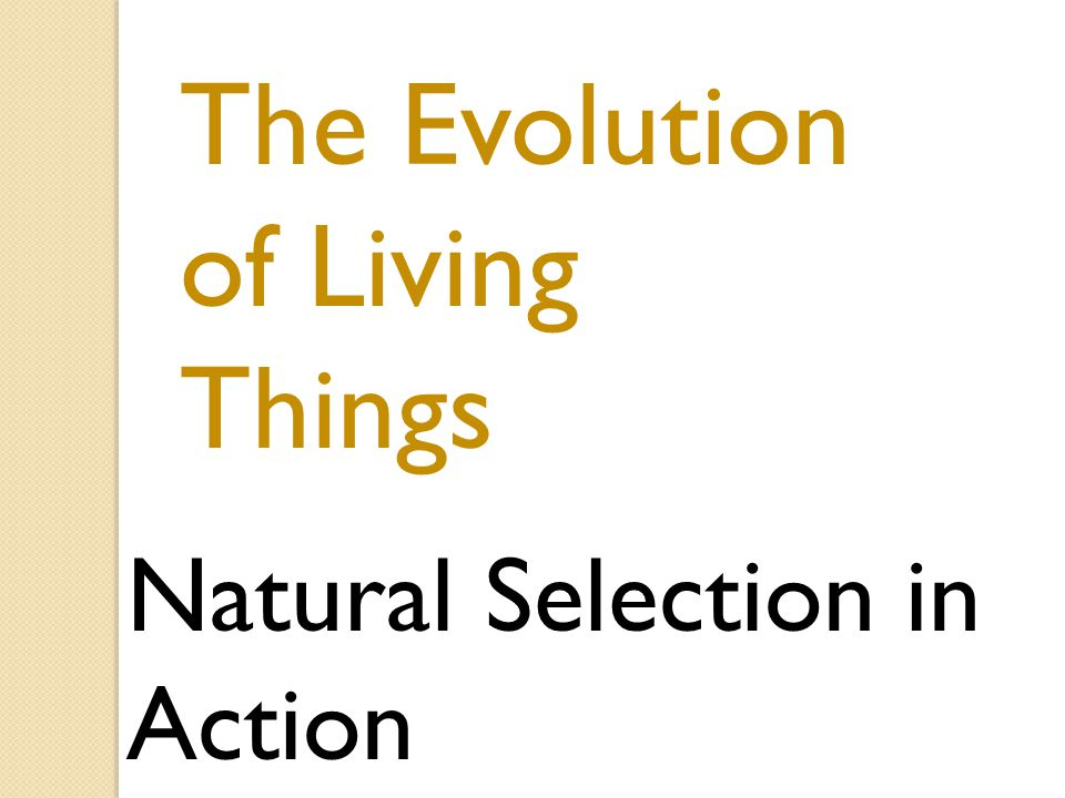 The Evolution of Living Things Natural Selection in Action