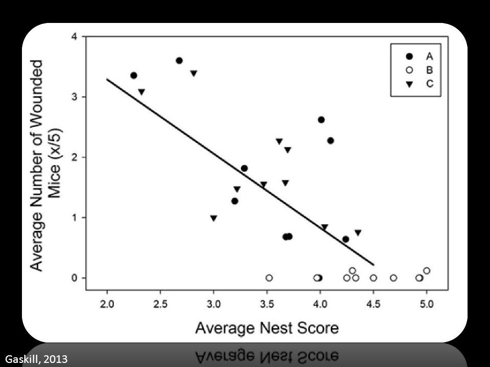 Nest Score Gaskill, 2013