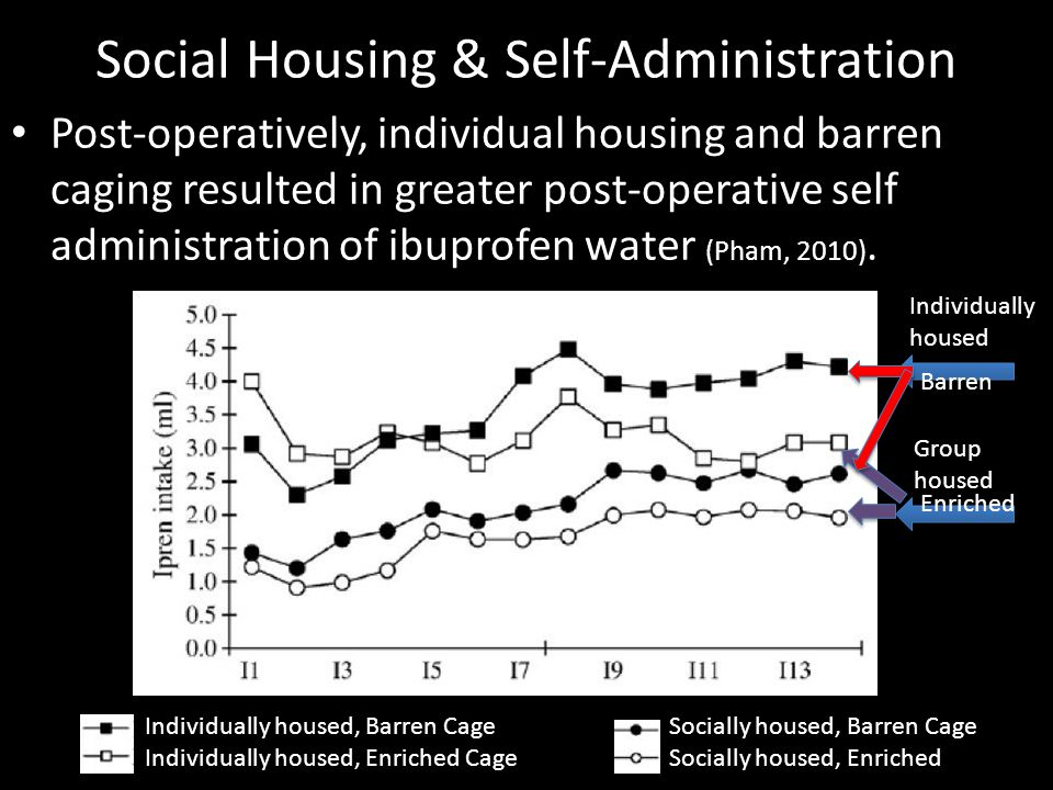 Socially housed, Barren Cage Socially housed, Enriched Social Housing & Self-Administration Post-operatively, individual housing and barren caging res