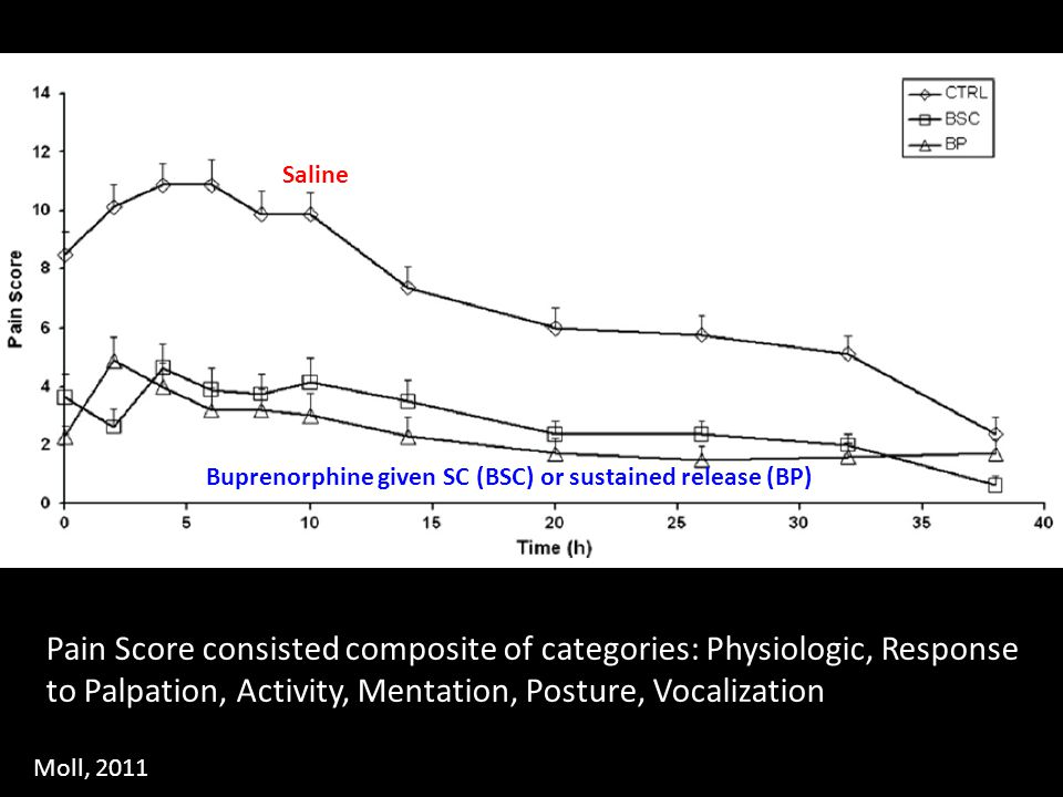 Saline Buprenorphine given SC (BSC) or sustained release (BP) Pain Score consisted composite of categories: Physiologic, Response to Palpation, Activi