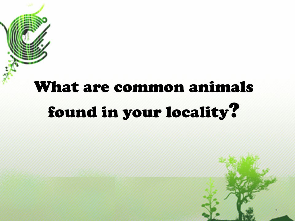 On Land  Animals live on land are called terrestrial animals.