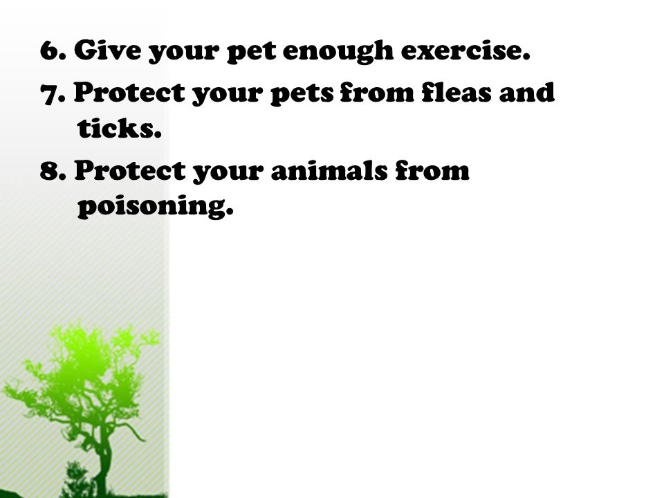Here are some ways you can show attention and love to your pets: 1.Provide your pet with a balanced diet and clean water. 2.Give your pet a proper she